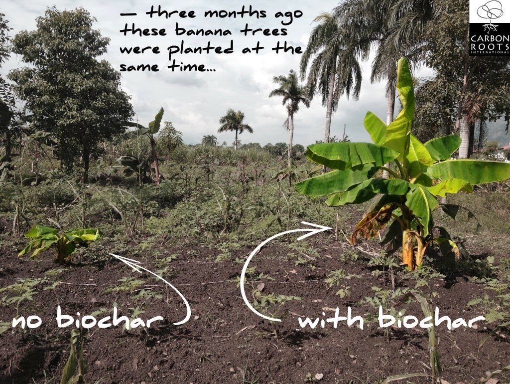Biochar-Bananas-1024x770